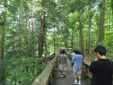 Path leading to Brandywine waterfall